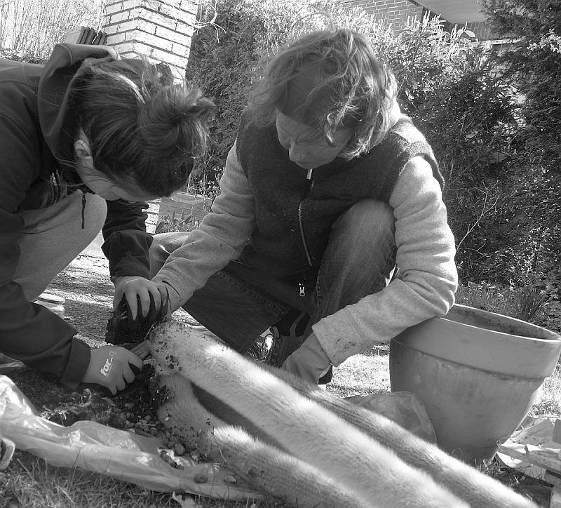 Hausunterricht Biologie Verhalten Hege und Pflege von Wüstenpflanzen